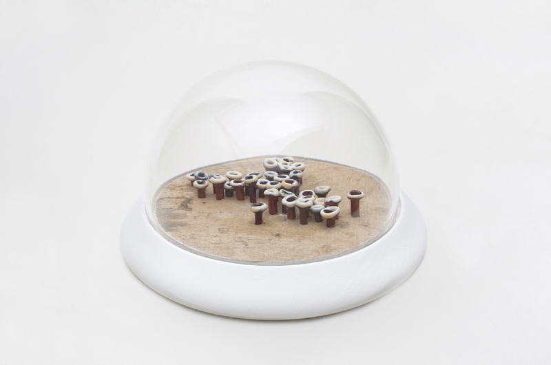 Wood and Glass Dome with Glass LIchen